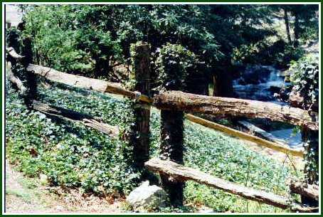 Ivy covered fence at Maggie Valley's Most Romantic Inn - Timberwolf Creek Bed and Breakfast - NC - Smoky Mountains